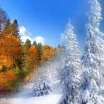 Transitioning the Seasons - Learning to adapt from a warm climate to frozen winter (2)