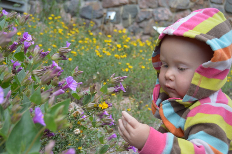baby in field of flowers