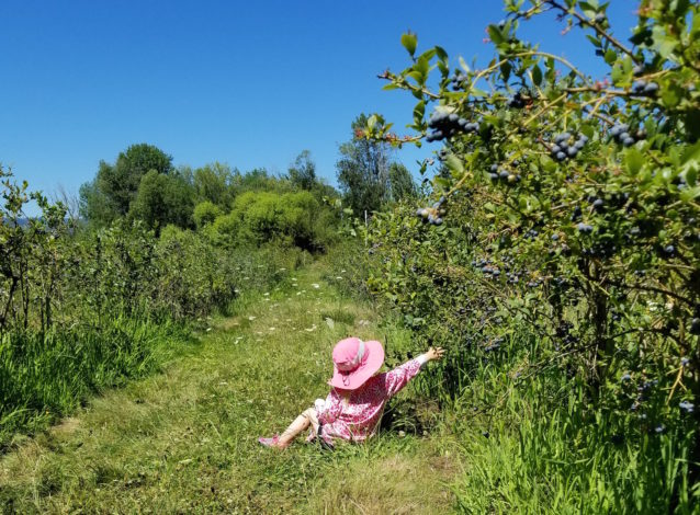 Child is picking berries.