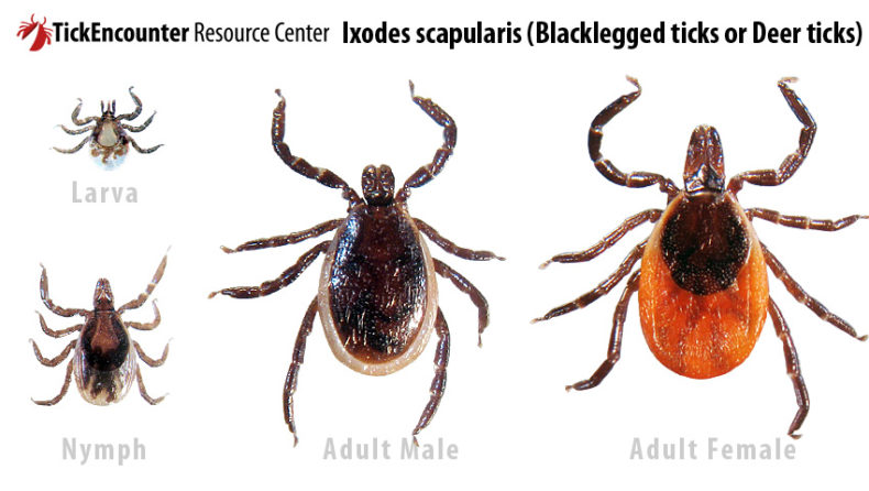 Tick Prevention in Colder Months by Rebecca Hosley for Hike it Baby.