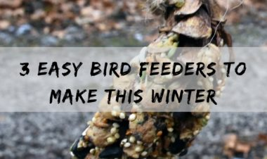 3 easy bird feeders to make this winter by Vong Hamilton for Hike it Baby
