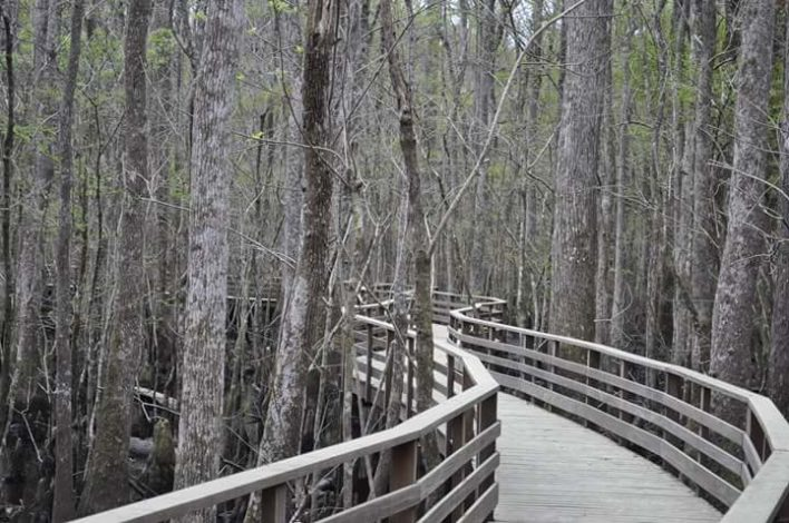 3 Stunning South Carolina Trails for Families with Young Children by Rebecca Her for Hike it Baby
