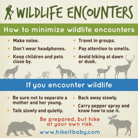 Wildlife encounter by Erin Pennings for Hike it Baby