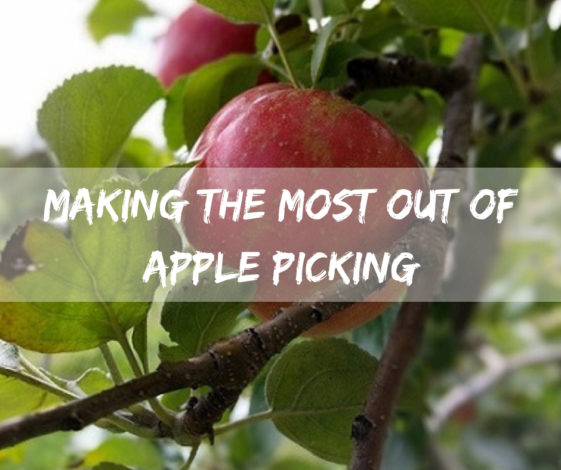 Making the Most Out of Apple Picking by Jessica Nave for Hike it Baby