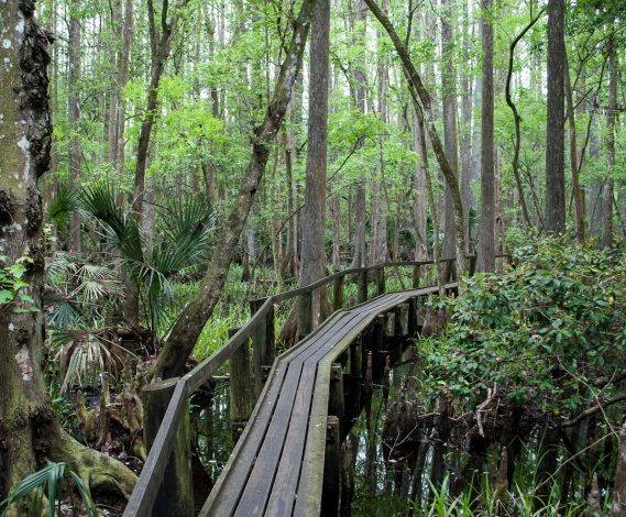 3 Hikes for families with young children in Florida by Vong Hamilton for Hike it Baby
