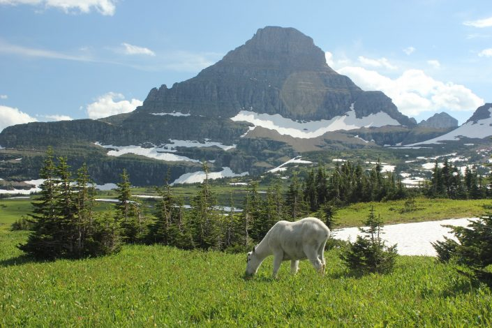 10 Unforgettable things to do in Glacier National Park with kids by Steven Smith for Hike it Baby